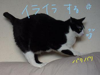 1.12.4.RIMG2356.jpg