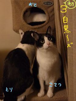 1.23.10.RIMG0466.jpg