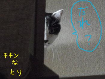 1.8.1.RIMG0178.jpg