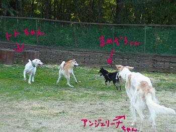 10.10.6.RIMG4269.jpg