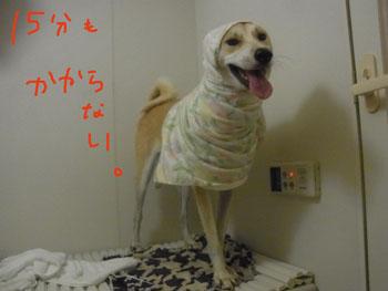 12.11.7.RIMG4619.jpg