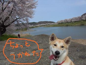 4.14.4.RIMG2113.jpg