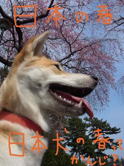4.15.2.RIMG1651.jpg