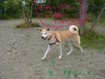 7.4.7.RIMG4389.jpg