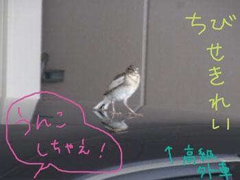 7.15.1.RIMG4630.jpg